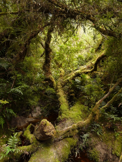 Rainforest, South Cape Range