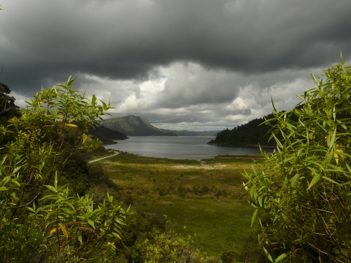 NZ11 08 062