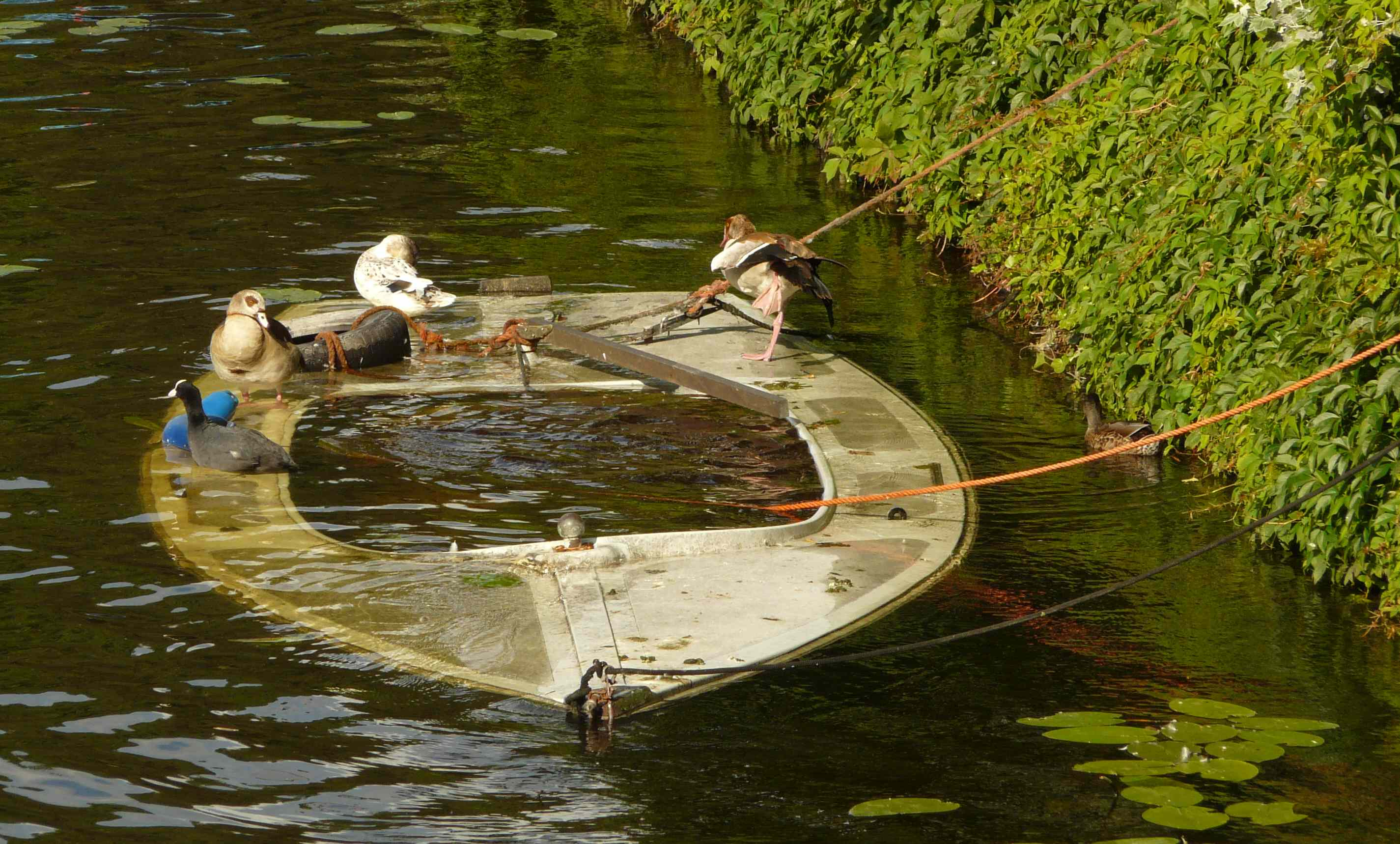 Mallard Boat Pictures To Pin On Pinterest Pinsdaddy