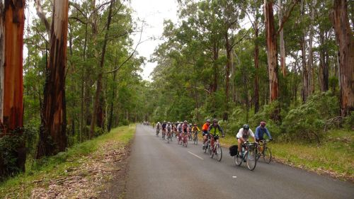 The RACV Great Victorian Bike Ride - fabulous organisation, great routes and rather a lot of company.