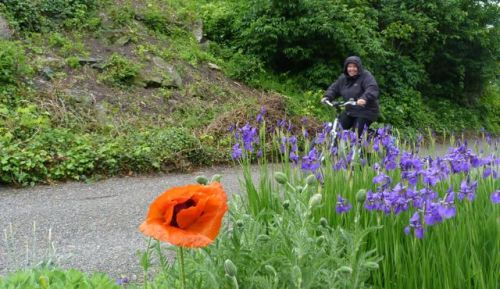 The day was grey, but there was a splash of colour in Romanshorn's gardens.