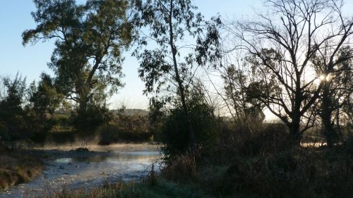 Morning light on the Namoi River, Manilla