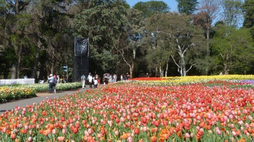 It may not be the Keukenhof, but it's nearly as spectacular and far less crowded.