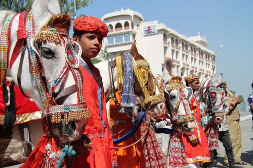 The horsemen of Udaipur.