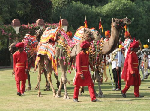 The camels have nothing whatever to do with the game.