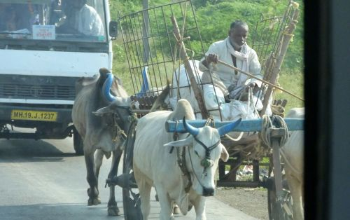 Those who've spent time in India may be blase about this, but we're still excited by oxcarts.