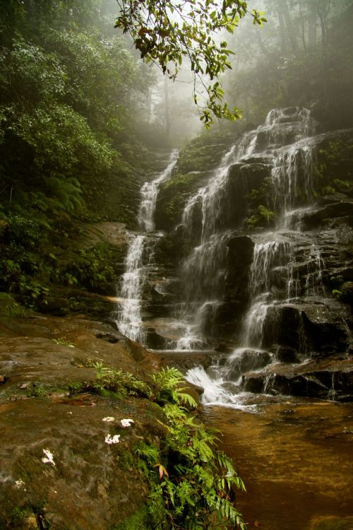 Empress Falls, Blue Mountains, NSW.  Camera in point and shoot mode, letting the mist provide the blurring and the magic.