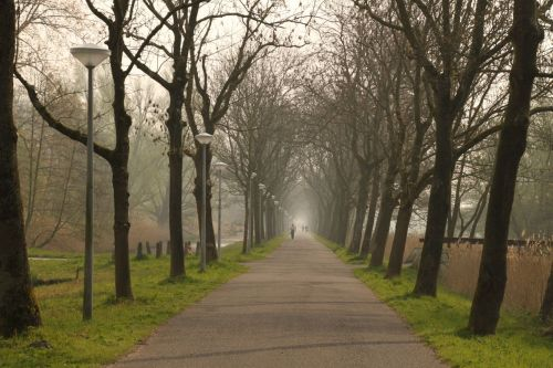 A bit of mist in the car-free avenue that is Kalfjeslaan, a great path out of Amsterdam.