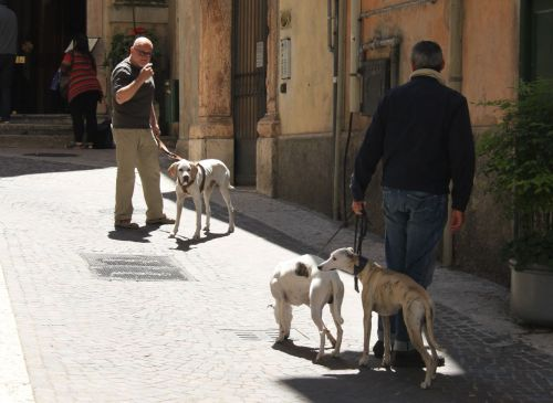 There's always something going on in the Veronese streets.
