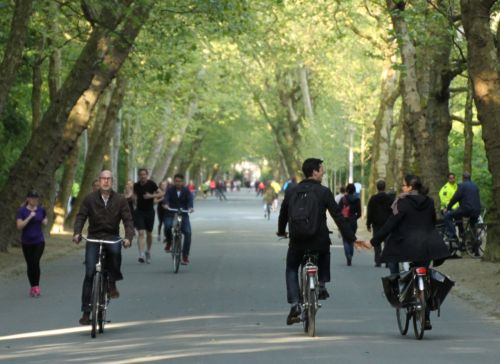 If you don't mind dodging the bikes, the Vondelpark is a lovely 4-5km circuit.
