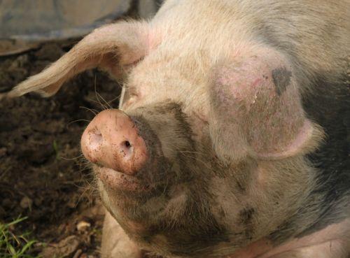 We were as happy as pigs in mud.
