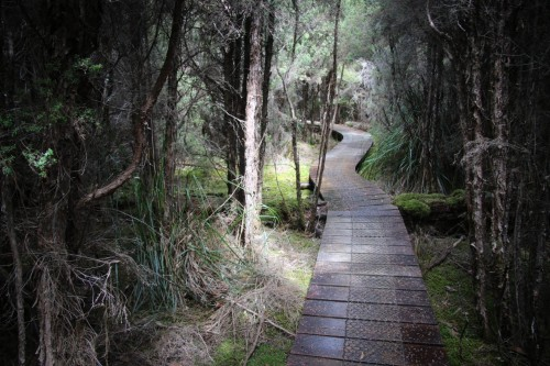 Lake St Clair is well set up for walking. If it seems a little too well organised, remember that it's done not so much to make life easier for hikers, but to protect the plants by the track.