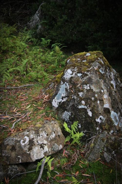 I love the bright green splattered against the dark rocks.