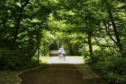 Cycling in the Amsterdamse Bos. There are over 50km of paths to choose from.