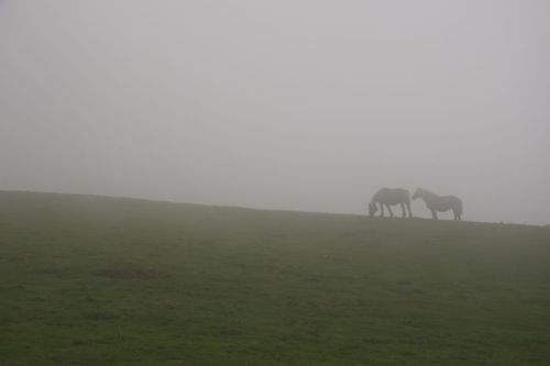 Horses in mist (in case you were wondering.)