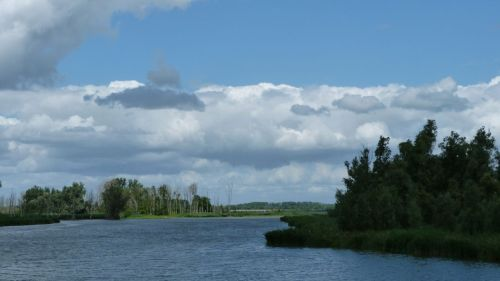 The Biesbosch.