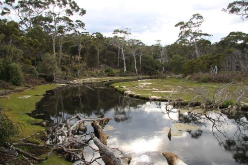 Counsel Creek, Maria Island